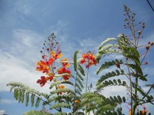 Galveston Flowers