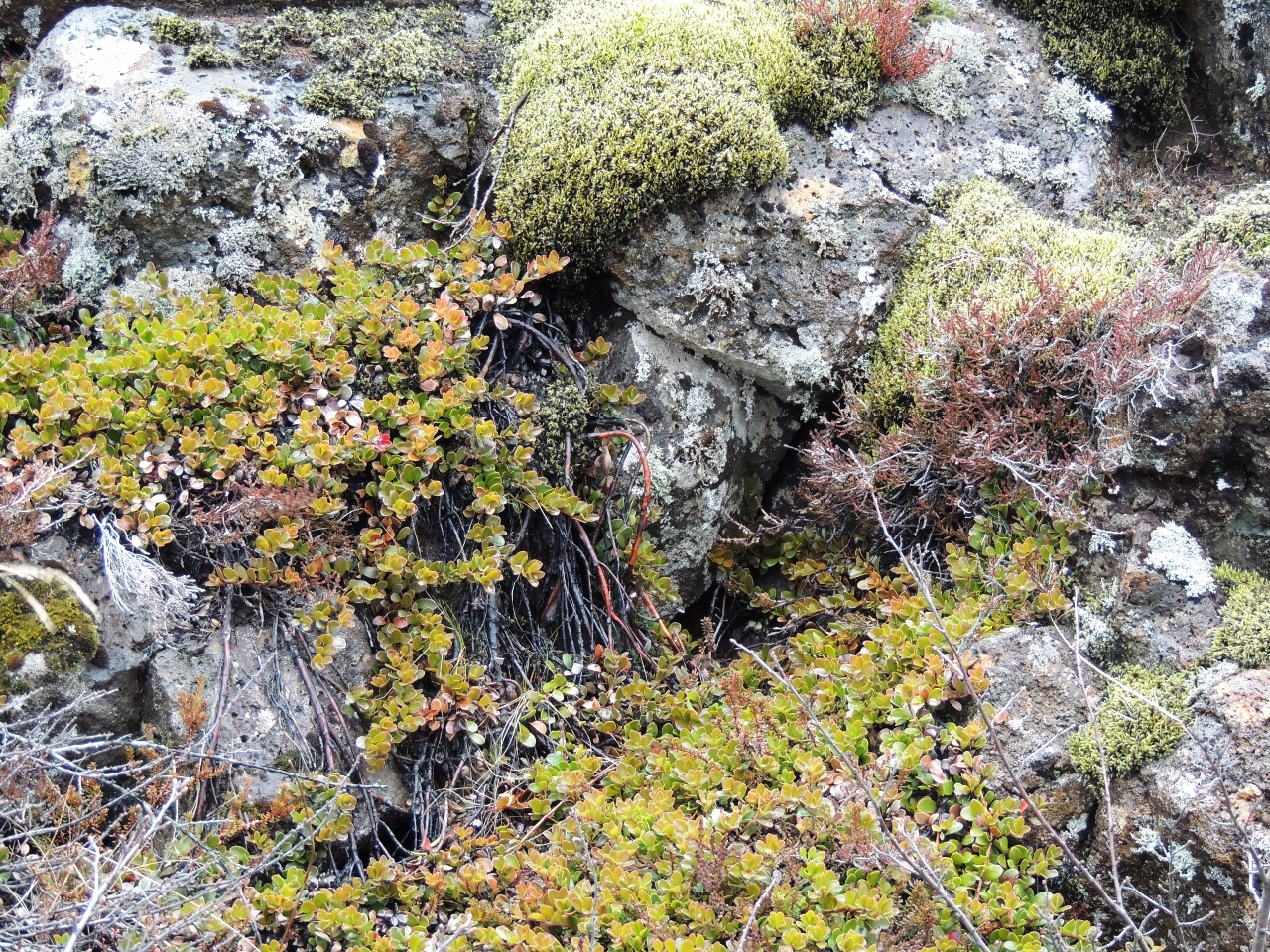 Bild und Gedicht des Monats Mai: Island