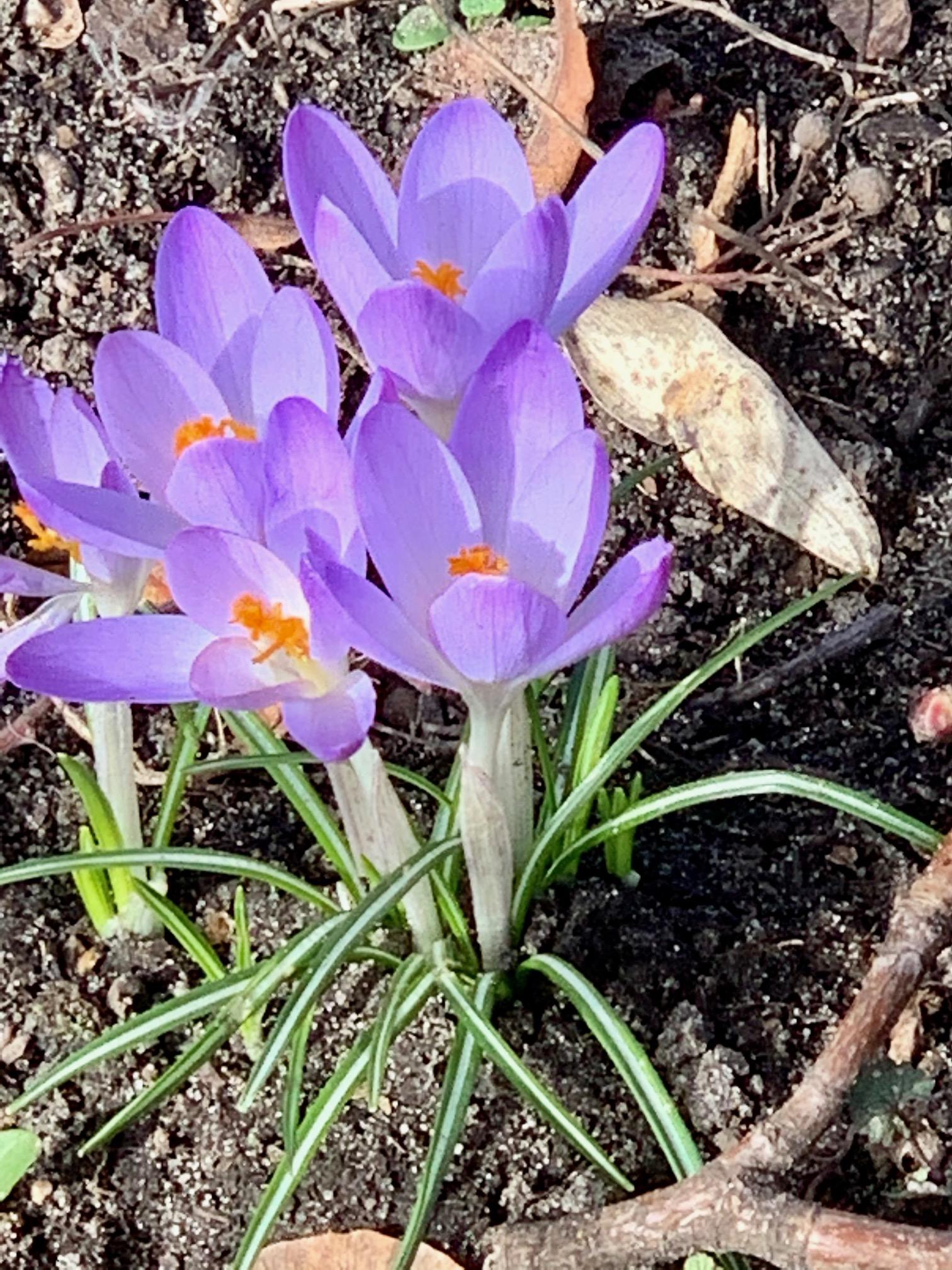 Bild und Gedicht des Monats März